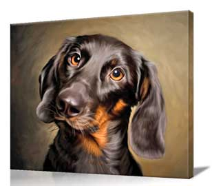 Dachsund Dog portrait